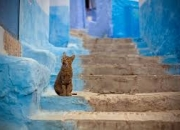 Марокко. Купить тур во Владимире